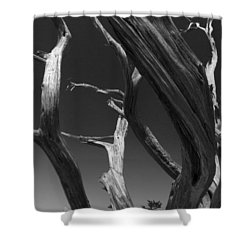 Shower Curtain featuring the photograph Lone Tree by David Gleeson