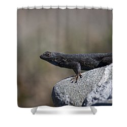 Shower Curtain featuring the photograph Look At Me by Ivete Basso Photography
