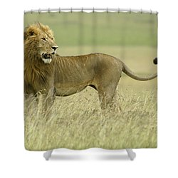 Looking Around Shower Curtain by Michele Burgess