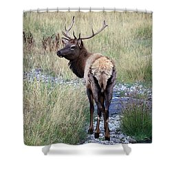 Looking Back Bull Shower Curtain by Steve McKinzie