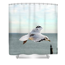Shower Curtain featuring the photograph Looking For Dinner by Clayton Bruster