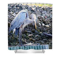 Looking For Lunch Shower Curtain by Marilyn Holkham