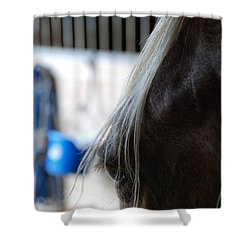 Looking Forward Shower Curtain by Jennifer Ancker