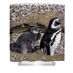 Looking Out For You - Penguins Shower Curtain by Patricia Barmatz