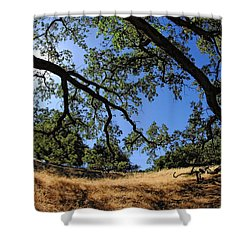 Looking Through The Oaks Shower Curtain by Donna Blackhall