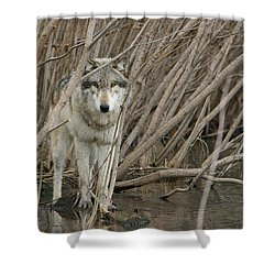 Looking Wild Shower Curtain