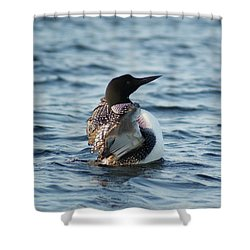 Loon Dance 1 Shower Curtain