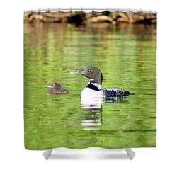 Loons Big And Small Shower Curtain