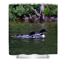 Loons With Twins 2 Shower Curtain