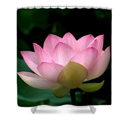 Lotus Beauty--blushing Dl003 Shower Curtain by Gerry Gantt