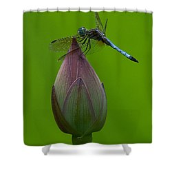 Lotus Bud And Blue Dasher Dragonfly Dl007 Shower Curtain by Gerry Gantt