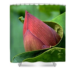 Lotus Bud--bud In A Blanket Dl049 Shower Curtain by Gerry Gantt