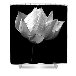 Lotus Bw Shower Curtain