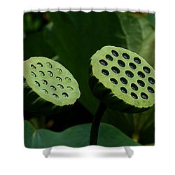 Lotus Capsules-sun Worshipers Dl052 Shower Curtain