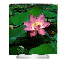 Lotus Flower And Capsule 24a Shower Curtain by Gerry Gantt