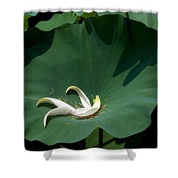 Lotus Leaf--castoff IIi Dl060 Shower Curtain by Gerry Gantt
