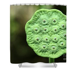 Lotus Seeds Shower Curtain by Sabrina L Ryan