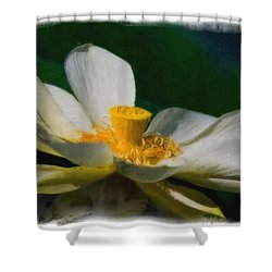 Shower Curtain featuring the photograph Lotus by Travis Burgess