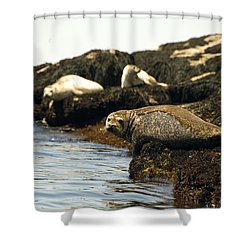 Lounging Seals Shower Curtain by Rick Frost