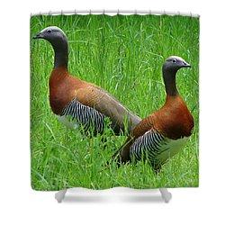 Love Birds Shower Curtain by Ramona Johnston