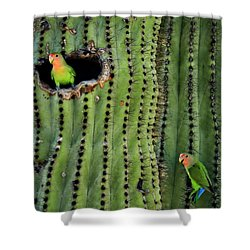 Lovebirds And The Saguaro  Shower Curtain