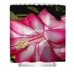 Luminous Cactus Flower Shower Curtain by Kaye Menner