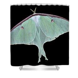 Luna Moth Shower Curtain by Paul Ward