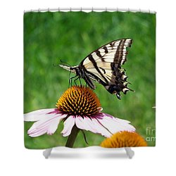 Lunch Time Shower Curtain by Dorrene BrownButterfield