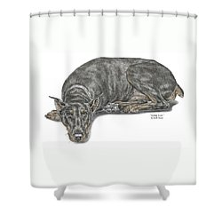 Shower Curtain featuring the drawing Lying Low - Doberman Pinscher Dog Print Color Tinted by Kelli Swan
