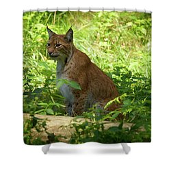 Lynx Shower Curtain by Jouko Lehto
