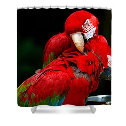 Macaws Shower Curtain by Paul Ge