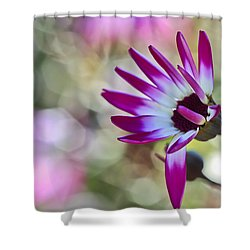 Magenta Shower Curtain by Heidi Smith