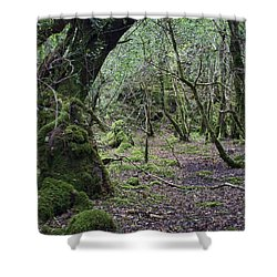 Shower Curtain featuring the photograph Magical Forest by Hugh Smith