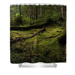 Magical Forest Shower Curtain by Mike Reid