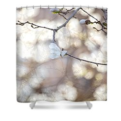 Shower Curtain featuring the photograph Magnolia Dream by Susan Cole Kelly