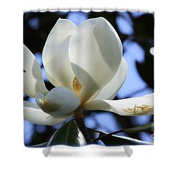 Magnolia In Blue Shower Curtain by Carol Groenen