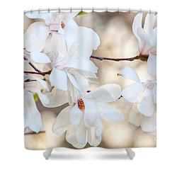 Shower Curtain featuring the photograph Magnolia Spring by Susan Cole Kelly
