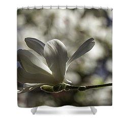 Magnolia X Loebneri  Merrill. Shower Curtain