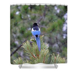 Magpie In Snow Shower Curtain