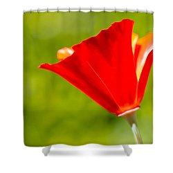 Mahogany California Poppy I Shower Curtain by Heidi Smith