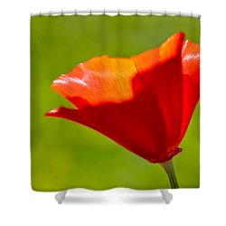 Mahogany California Poppy IIi Shower Curtain by Heidi Smith