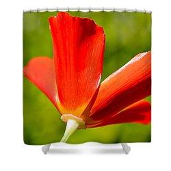 Mahogany California Poppy Iv Shower Curtain by Heidi Smith