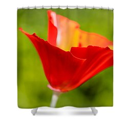 Mahogany California Poppy V Shower Curtain by Heidi Smith