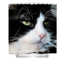 Maine Coon Face Shower Curtain by Art Dingo