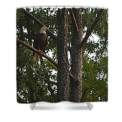 Shower Curtain featuring the photograph Majestic Bald Eagle by Clayton Bruster