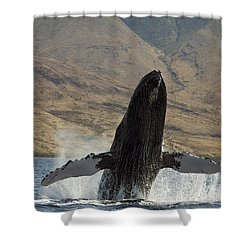 Majestic Breaching Whale Shower Curtain by Dave Fleetham