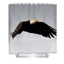Shower Curtain featuring the photograph Majestic Flight by Polly Peacock
