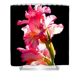 Majestic Gladiolus Shower Curtain
