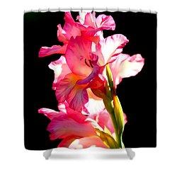 Majestic Gladiolus Shower Curtain by Patrick Witz