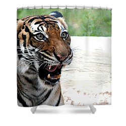 Shower Curtain featuring the photograph Make My Day by Kathy  White